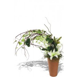 Windswept Arrangement