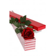 1 Long Stem Premium Rose Presentation Box